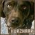 Dogs: Kurzhaar