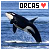 Whales: Orcas