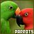 Birds: Parrots