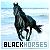 Horses: Black