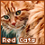 Felines: Red/Orange Cats