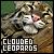 Felines: Clouded Leopard
