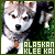 Canines: Alaskan Klee Kai