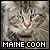 Cats: Maine Coon