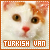 Cats: Turkish Van