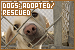 Dogs: Adopted & Rescued
