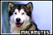 Dogs: Alaskan Malamutes