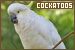 Birds: Cockatoos