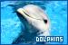 Aquatic: Dolphins