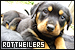 Dogs: Rottweilers